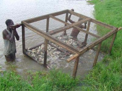 Kenya_fish_farming