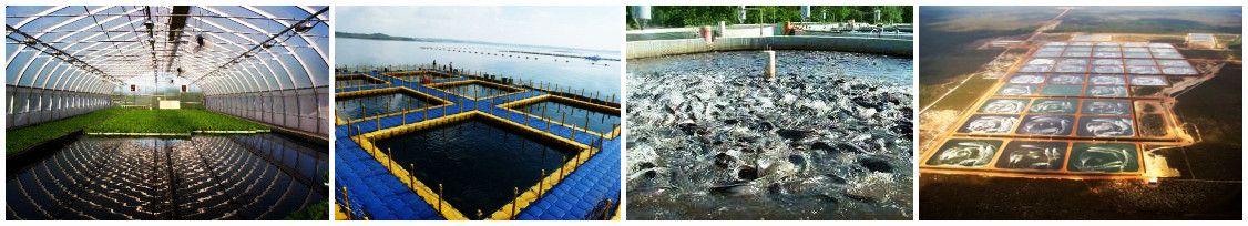 fish farm type in Indonesia