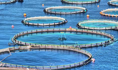 Rapid Development of Fish Farms in Indonesia