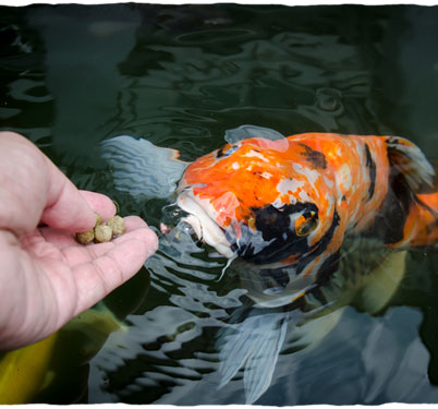 feed-fish