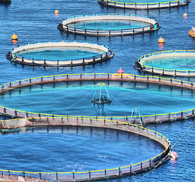 Development of indonesian fish farming aquaculture for Indiana fish farms