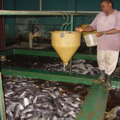 fish_farming_in_Nigeria