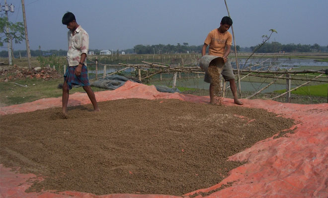 fish_feed_pellets_production
