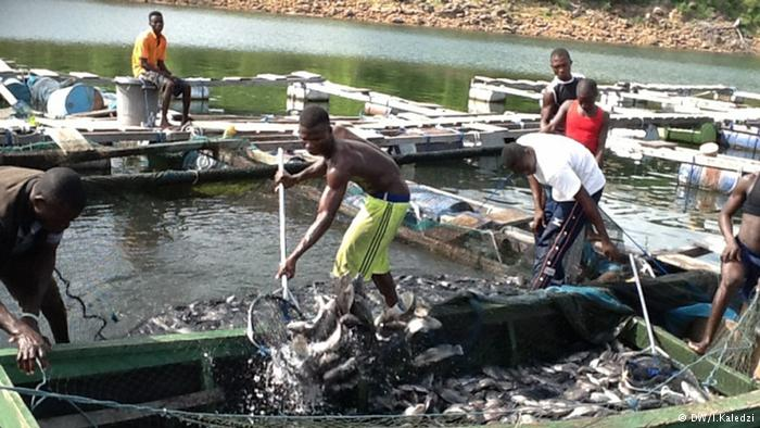 Ghanaian_fish_farming