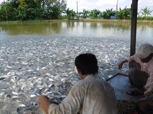 small scale fish farms
